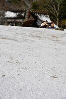 雪化粧した阿波史跡公園=18日午前9時半ごろ、徳島市国府町西矢野