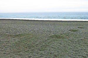 大里松原海岸に約50メートルにわたり残っていたウミガメの上陸跡。4カ所、穴を掘っていたが、専門家によると、産卵はしていなかった=海陽町