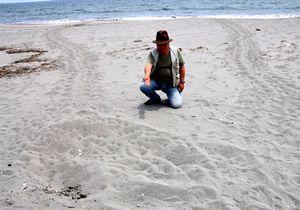 アカウミガメが掘ったとみられるくぼみを指さす勝浦さん=松茂町豊岡の松茂海岸