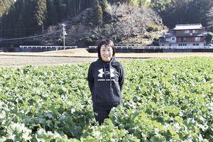 2月下旬の取材時は、菜の花の収穫真っ只中。