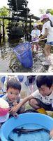 [上]用水路で生き物を探す子どもたち[下]見つけたナマズを観察する子どもたち=いずれも小松島市田浦町西原