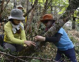 樹木に食害防止のネットを巻き付ける参加者=剣山山頂周辺
