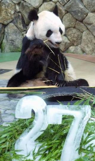 父さんパンダ「永明」27歳に