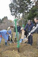 板東さんをしのびながら桜を植樹する卒業生=美馬市木屋平貢の貢公園