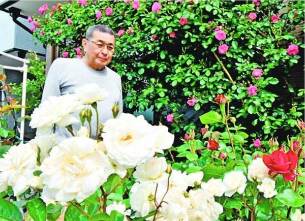 見頃を迎えたバラ=小松島市金磯町の西野さん宅