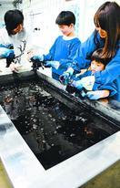 阿波藍 日本遺産認定に関係者喜び、活性化期待