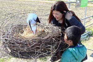 コウノトリの巣の模型を眺める親子=鳴門市大麻町