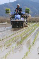 田植え機で早場米を植える農家=阿南市長生町