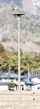鳴門市大津町にコウノトリ人工巣塔 徳島県が月内整備