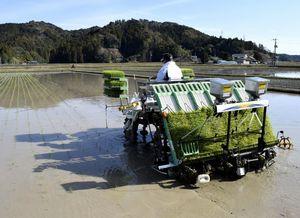 海陽町で始まった早場米の田植え=同町中山
