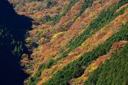 岡山市の女性が国見山で遭難、三好署などが捜索