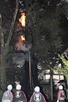 炎を上げて燃えるスギ=12日午後5時半ごろ、神山町神領の腰の宮神社
