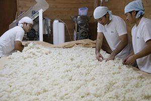 蒸した米と麹菌を混ぜる=三好市の芳水酒造