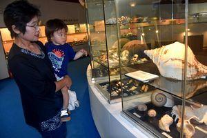 世界中の貝が展示されているモラスコむぎ=牟岐町灘