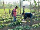 衣料の丸久(鳴門市)がバングラデシュで農業事業