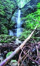 「八多五滝」荒れ放題 徳島市が増水被害修繕せず