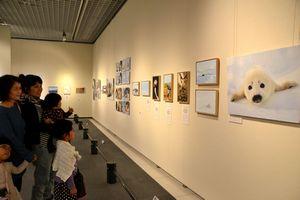 アザラシや極地の動物について紹介する「日本のアザラシと極地の動物たち」=県立博物館