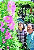 色鮮やかな花をつけたタチアオイ=阿南市那賀川町江野島
