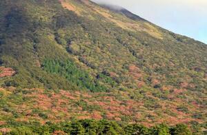 ナラ枯れ(下部)が深刻な鳥取県の大山=5日