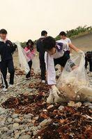 ウミガメ産卵心待ち 中学生ら蒲生田海岸清掃