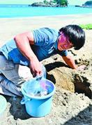 大浜海岸ウミガメ2年ぶり産卵 関係者安堵と期待 2…