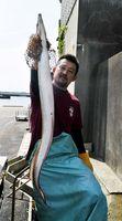 小松島市沖で捕れたハモ=同市小松島町元根井の小松島漁協元根井支所