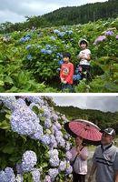 [上]会場周辺の花を楽しむ子どもたち=つるぎ町一宇[下]大輪の花を咲かせたアジサイに見入る来場者=牟岐町内妻
