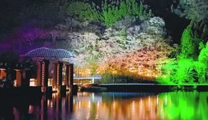 白や緑の照明に照らされ、幻想的な雰囲気が漂う一帯=那賀町鉢