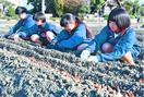北島チューリップ公園で球根4・8万個植え付け