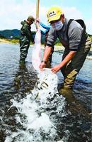 稚アユを放流する鮎喰川漁協の組合員=徳島市入田町