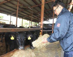 四国三郎牛の飼育に汗を流す北谷組合長=吉野川市川島町児島