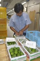 輸出用に箱詰めされるスダチ=石井町の県農林水産総合技術支援センター
