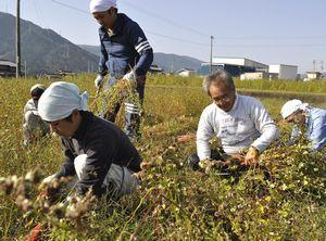 ソバを収穫する「三好素人農事研究會」のメンバー=東みよし町足代