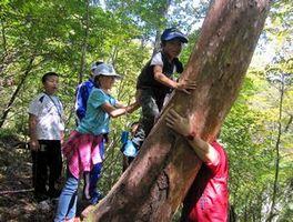 木登りを楽しむ児童ら=那賀町沢谷のファガスの森