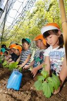 ゴーヤー大きくなーれ 徳島市で園児が緑のカーテン作り