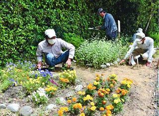 チョウが舞う花畑に 那賀川野菊・鷲敷菊保存会、植栽や清掃活動