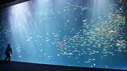 四国水族館6月1日営業再開