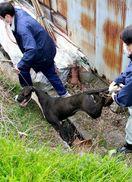 大型犬7匹一時逃走 飼い犬2匹かみ殺す 阿波市