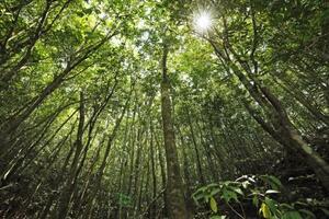 鹿児島県・奄美大島の山林