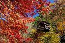 深まる秋、絶景 奥祖谷かずら橋&高の瀬峡