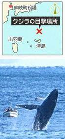 ザトウクジラが迫力ダイブ 徳島・牟岐沖