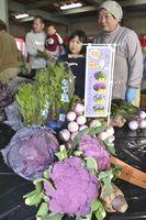 15年度の試験栽培で作られた藤野菜=石井町